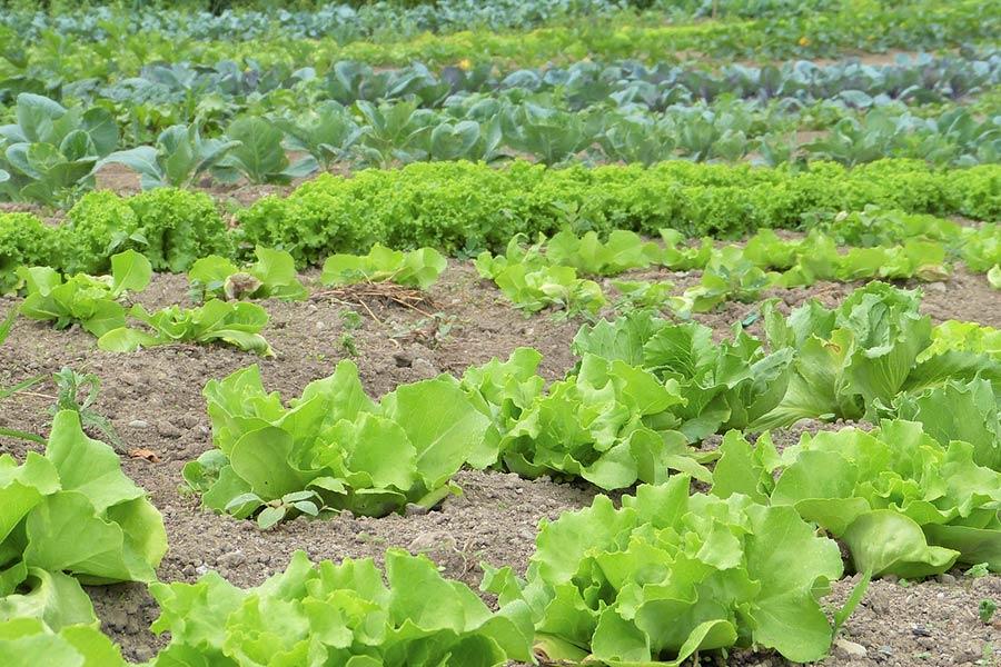 Gemüse von Büchner aus Arnstorf